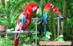 海南热带野生动植物园-一角