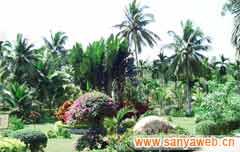 兴隆热带植物园-园景