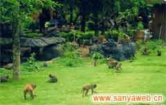 南湾猴岛自然保护区-猴子乐园