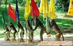 南湾猴岛自然保护区-猴子表演