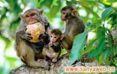 南湾猴岛自然保护区-猴趣
