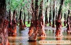东寨港红树林自然保护区-植物