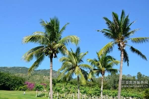 咫尺天涯 在海南三亚享受不一样的海风与风景