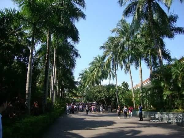 游祖国风光迷人的宝岛--美丽的海南岛