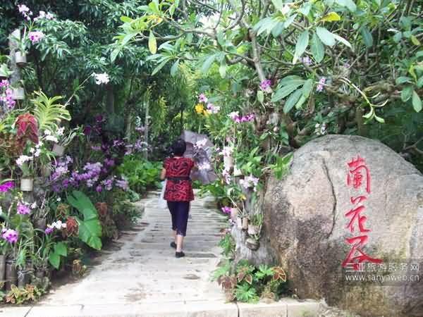 三亚亚龙湾热带天堂森林公园一日游游记